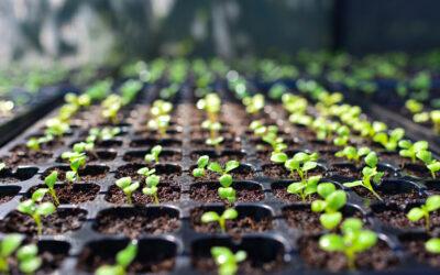 Nieuwe website voor Seed Processing Holland B.V.